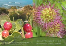 Plants that Clothe the Bluff
